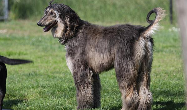 The Biggest Dog Breeds