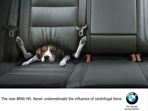 Clever Dog BMW Ad