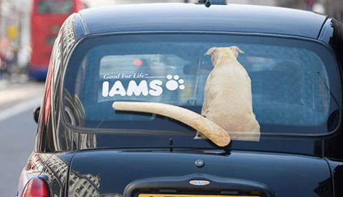 Clever Iams Ad
