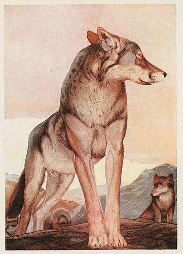 Akela, the Lone Wolf