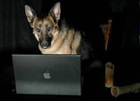 Dog Social Networking