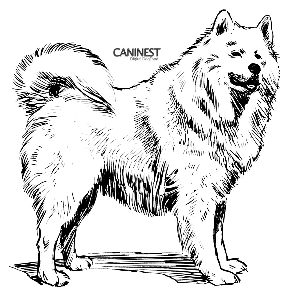 dog breeds coloring pages - photo#45