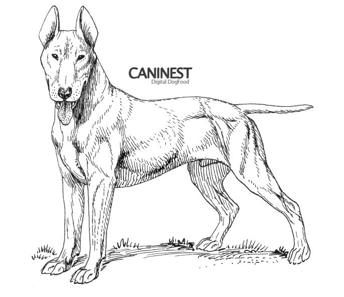 coloring pages of dog breeds - photo#35