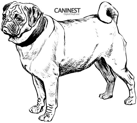 Pug Line Drawing