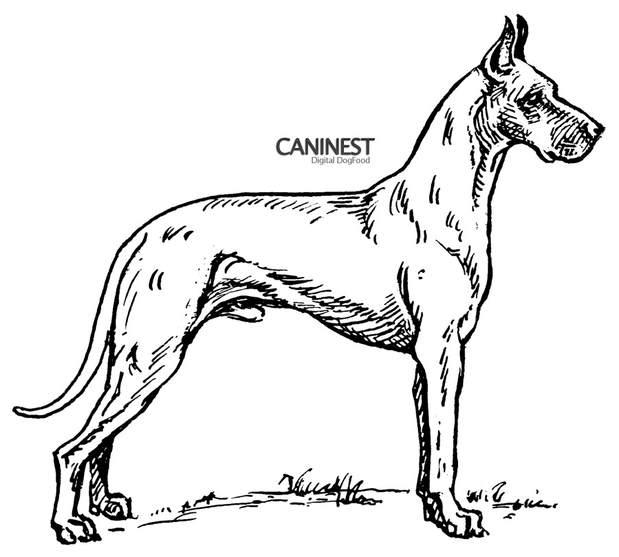 coloring pages of dog breeds - photo#5