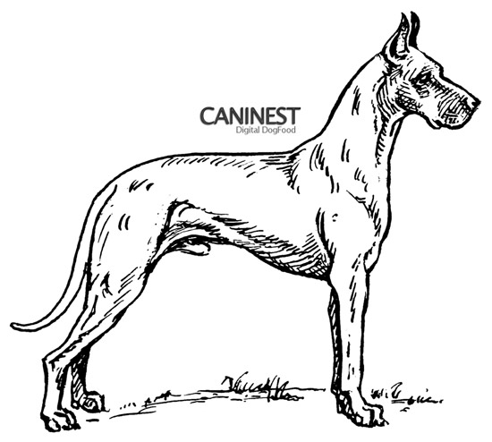 Great Dane Line Drawing