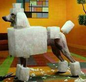 Square Cut Poodle