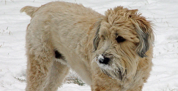 http://www.caninest.com/images/fallow-dog.jpg