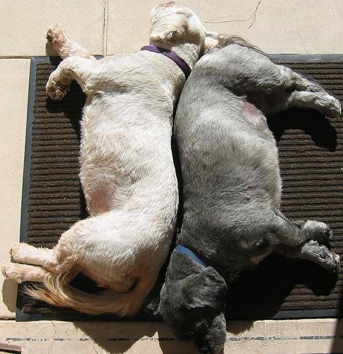 Yin & Yang Doggies