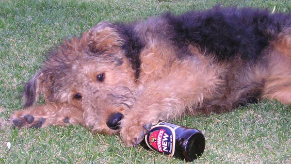 Dog with a beer bottle
