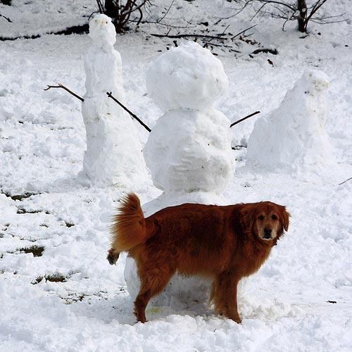 Dog Vs. Snowman