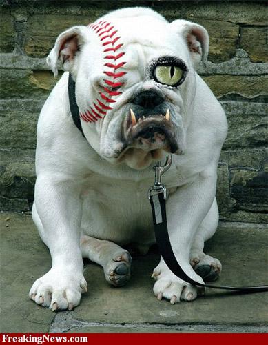Photoshop Dog
