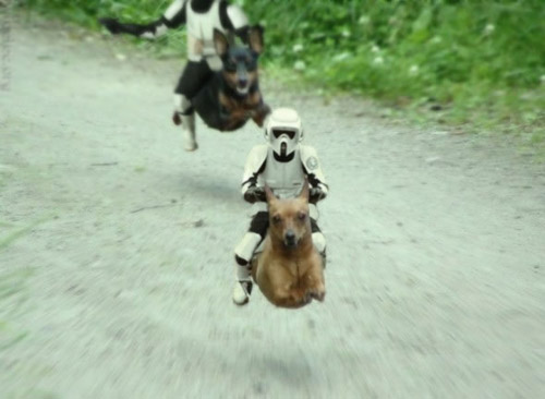 Photoshop Dog. Star Wars meets The Neverending Story