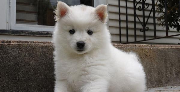 Standoff coat dog